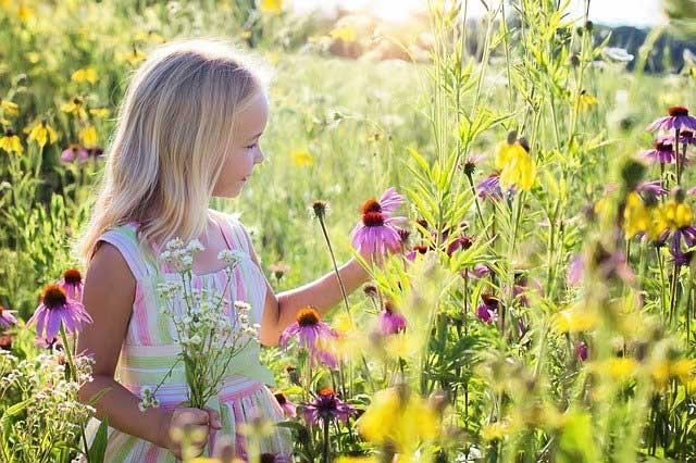 Ausflugsziele Schwarzwald mit Kind Blumenwiese